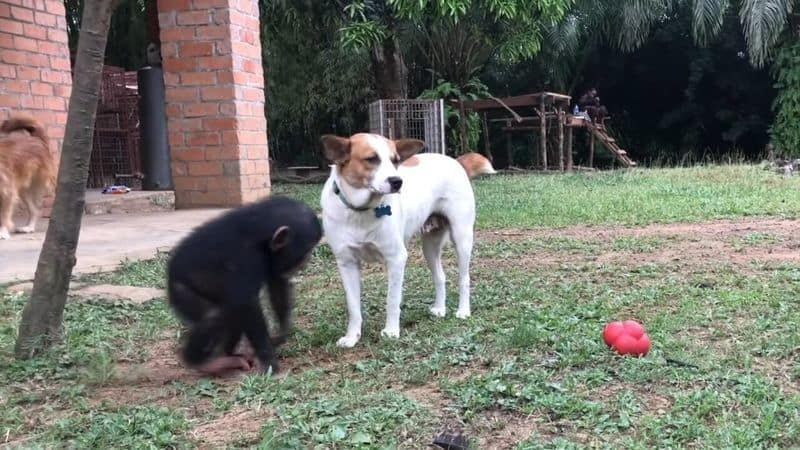 Couple Rescues Dying Dog From Liberian Village - Look At Him Now!