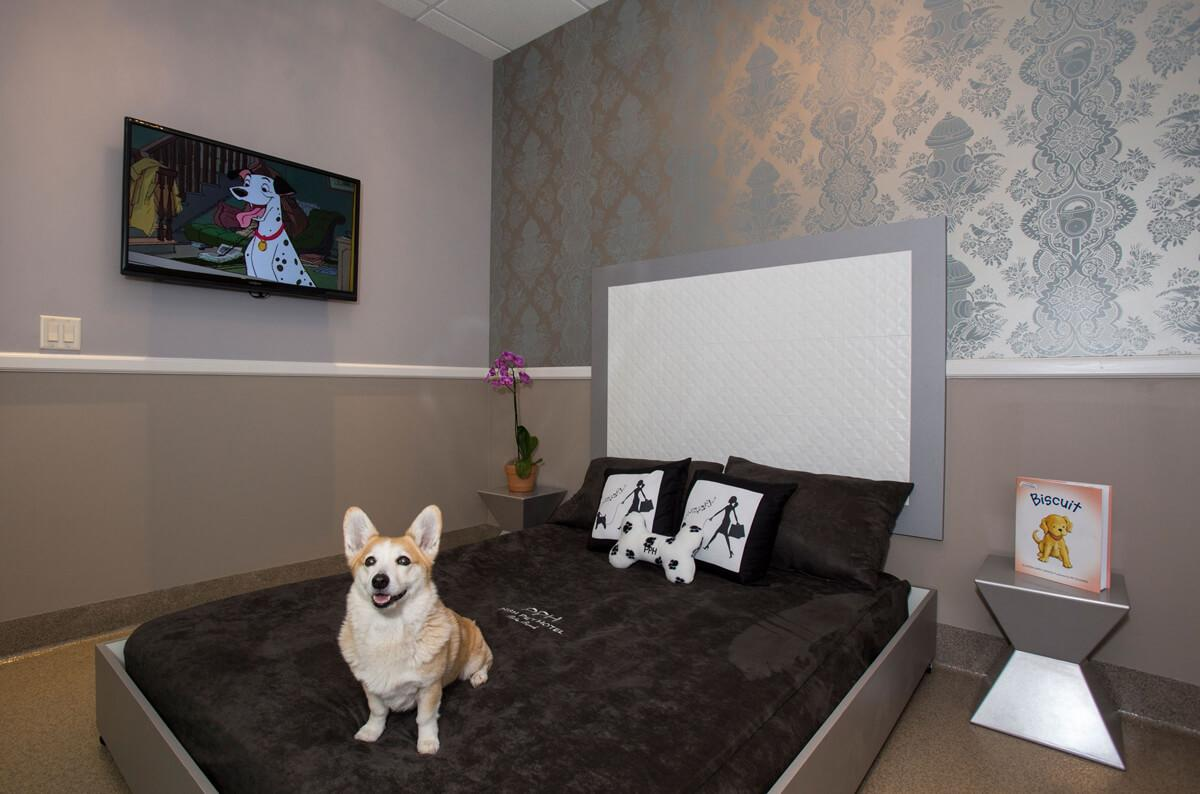 Check Out The World's Most Luxurious Pet Hotels Ever