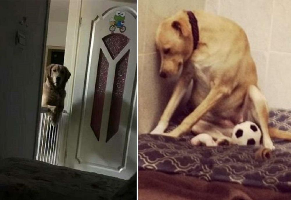 Adopted Dog Stares At Owners All Night Long, His Weird Trait Comes With A Heartbreaking Story