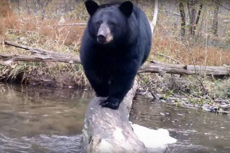 Man's Hidden Camera Captures Fascinating Wildlife Year-Round